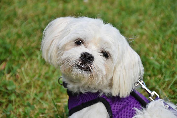 Quels accessoires acheter pour le chien que l'on vient d'adopter?